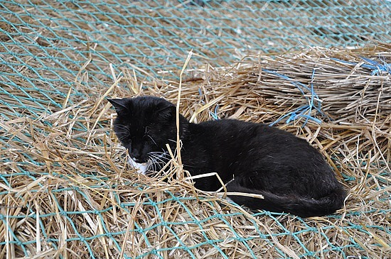 sleepy kitty at the farm